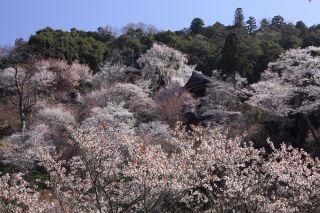 吉野山中千本・如意輪寺(イメージ) 画像提供:吉野ビジターズビューロー